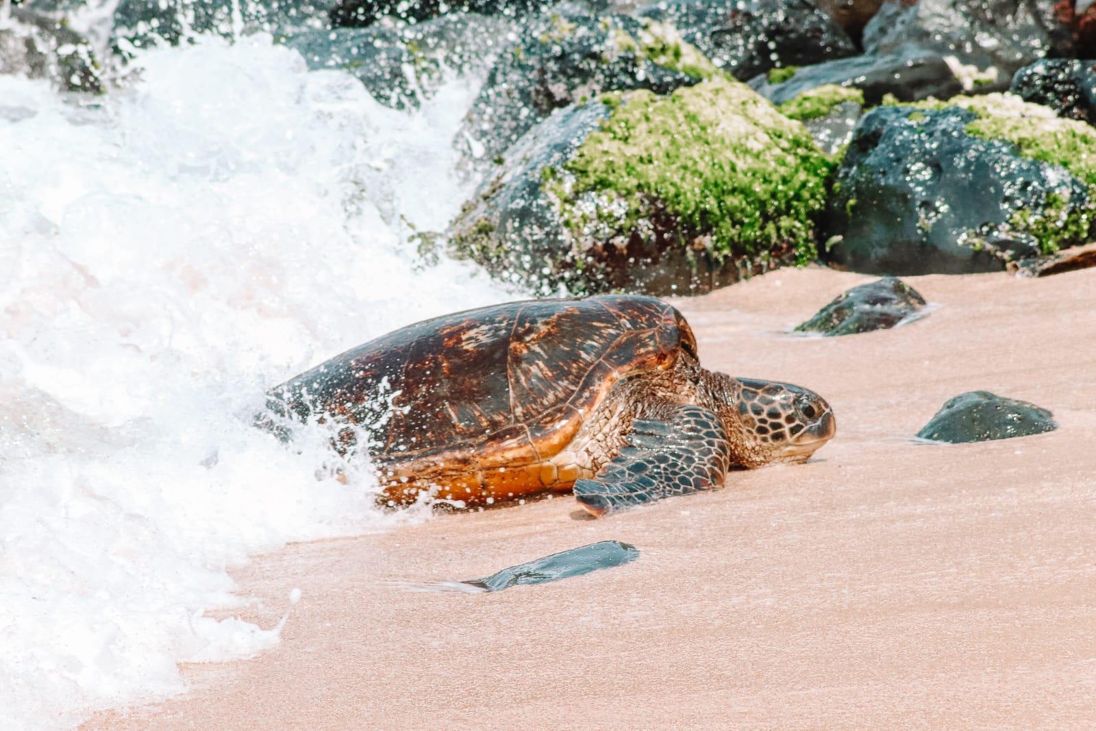 13 Best Beaches In Maui, Hawaii (14)