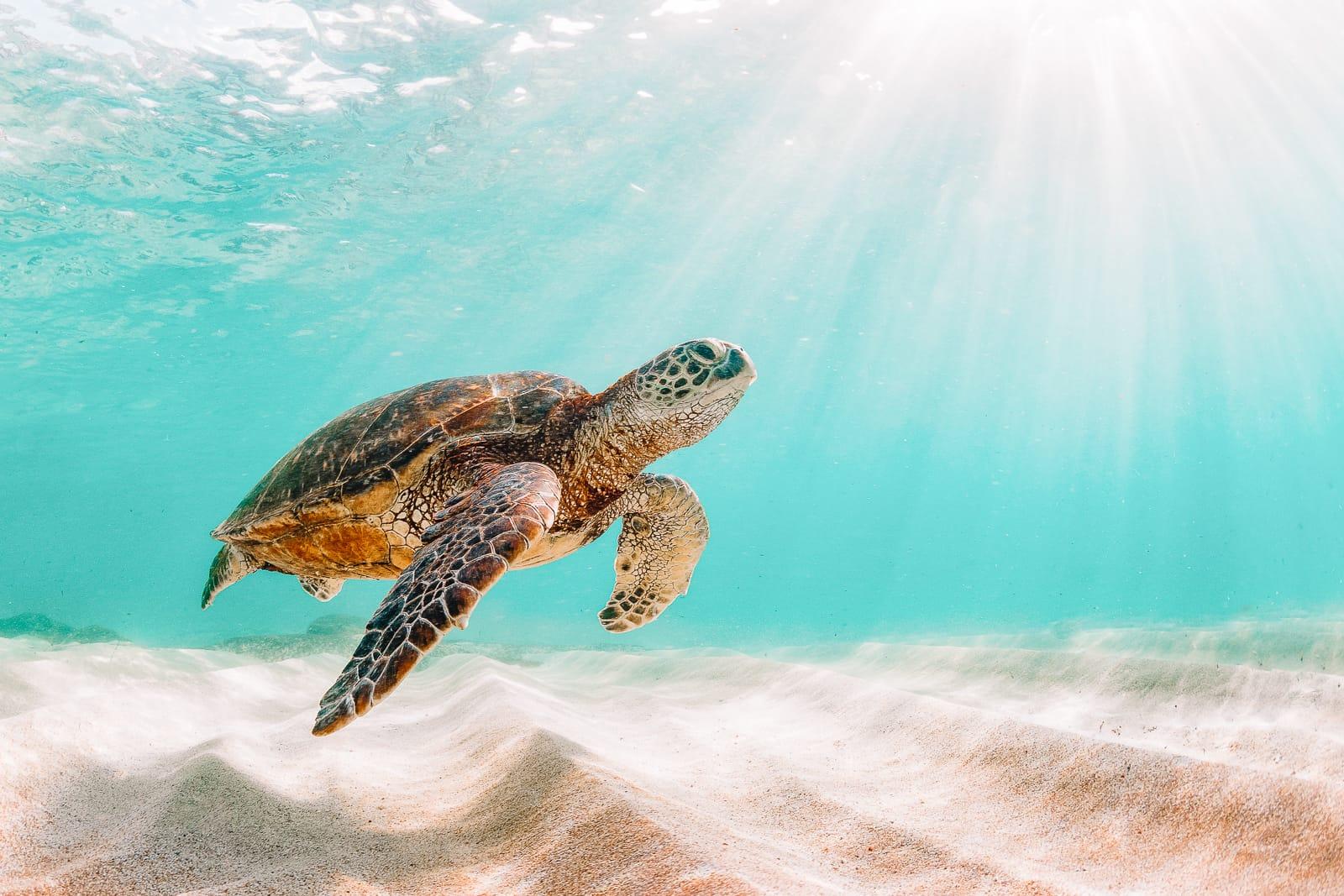 13 Best Beaches In Maui, Hawaii (5)