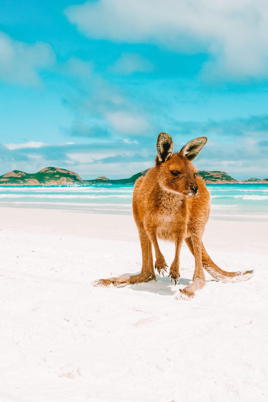 15 Best Beaches In Australia (14)