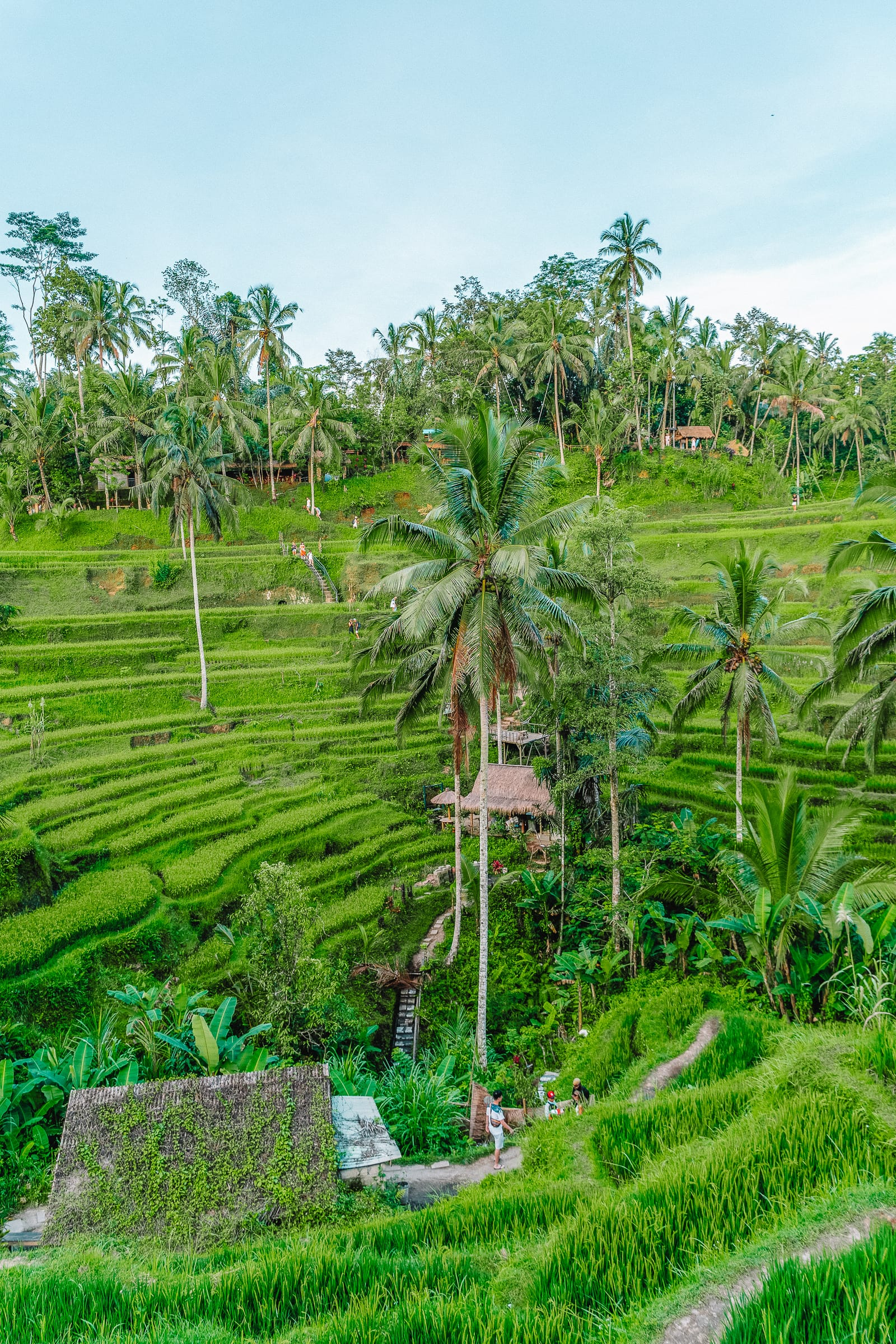 25 Best Things To Do In Ubud, Bali (21)
